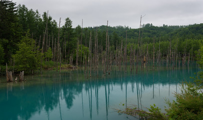 Reflections in the clear blue water of Shirogane Blue Pond, Biei, Hokkaido, Japan