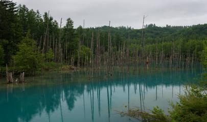 Reflections in the clear blue water of Shirogane Blue Pond, Biei, Hokkaido, Japan