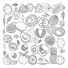 Tropical fruits. Vector illustration, doodle set