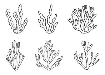 algae vector sketch. hand-drawing
