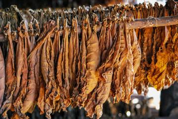 Trocknen von Tabakblättern