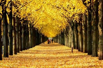 Baumallee in Hannover im Herbst