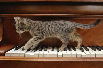 chaton tigré tabby sur piano dans intérieur maison