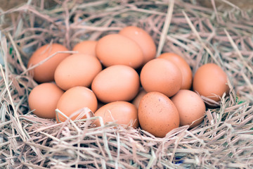 Group of eggs in a nest.