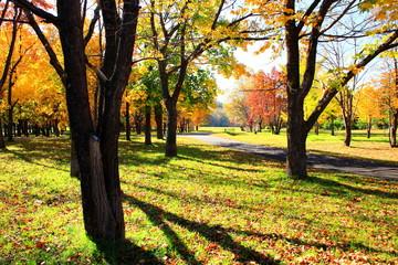 Park in Sapporo in autumn