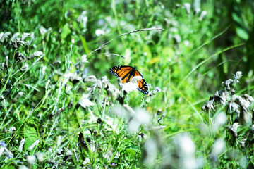 butterfly on green grass