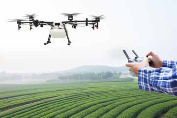 Farmer control agriculture drone fly to sprayed fertilizer on the green tea field