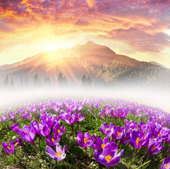 Wall Mural - Floral mountain spring