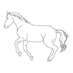 The contour of the horse on white background, vector illustration