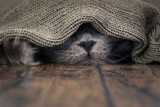 The nose of the cat under the blanket. The concept of heat, cold, the comfort of home