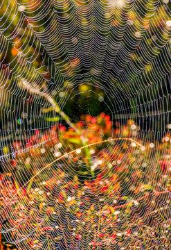 lovely background with web on beautiful foliage bokeh