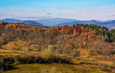 forest on a hill in front of a mountain ridge in autumn. gorgeous morning countryside landscape