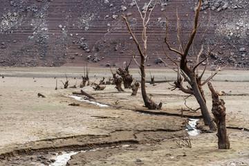 Riachuelo y árboles muertos del lecho seco del Embalse de Barrios de Luna, León, España.