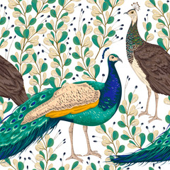 Seamless pattern with male and female peacock, berries and leaves. Vintage hand drawn vector illustration in watercolor style