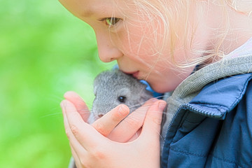 Girl is holding a chinchilla