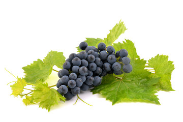 Blue grapes on white background.