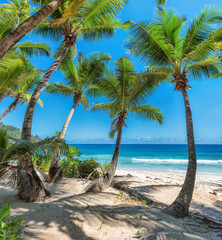 Fototapete - Coconut Palm trees on white sandy beach in Caribbean sea,