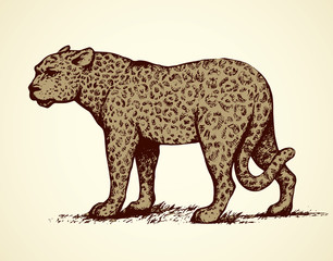 Leopard. Vector illustration