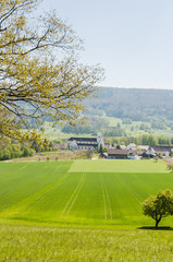 Mariastein, Dorf, Kloster, Kloster Mariastein, Spazierweg, Wanderweg, Wallfahrt, Landwirtschaft, Felder, Obstbaum, Frühling, Schweiz