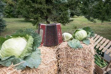 fresh fruits of the autumn harvest in the harvest festival