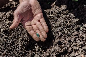 An elderly man planting seeds in the garden