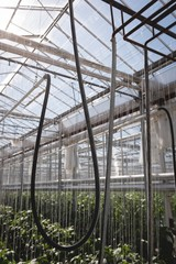 Interior view of greenhouse