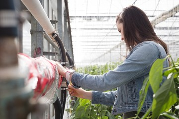 Woman working in greenhouse