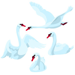 Swans on white background / There are four swans in cartoon style