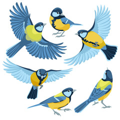 Titmouse on white background / There are three sitting titmouse and three flying titmouse in cartoon style