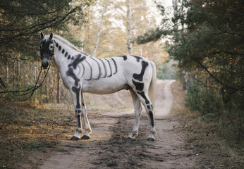 White horse painted as skeleton standing in the autumn forest