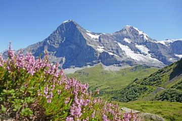 alpen: eigernordwand, schweiz