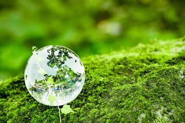 コケとツタとガラスの地球儀