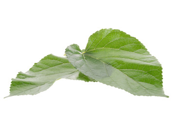 Mulberry leaf isolated on over white background
