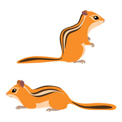 Vector illustration of standing and sitting chipmunks isolated on white background