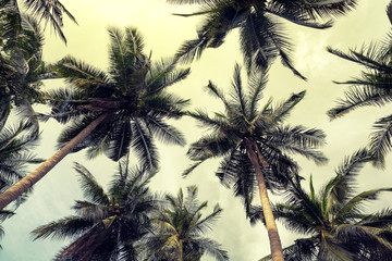 Coconut palm trees perspective view