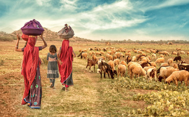 group rural girl going back to there house with flock of sheeps