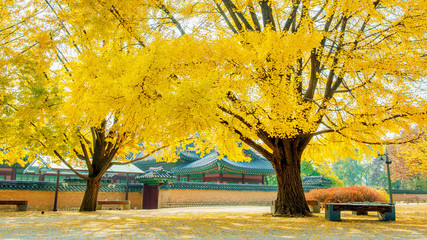 Wall Mural - Autumn in Gyeongbokgung Palace,South Korea.