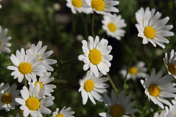 Spring Flowers in Greece, year 2017
