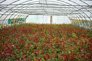 plantes, arbres et plantation de serre pépinière