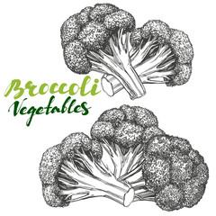 Broccoli vegetable set. Detailed engraved. Vintage hand drawn vector illustration realistic sketch.