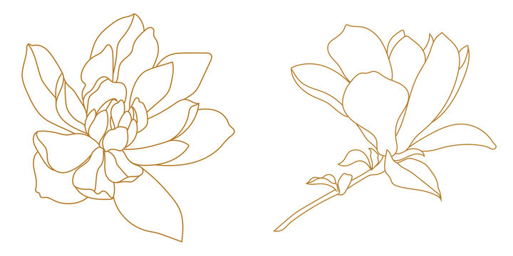 Set of golden graphical magnolia flower. Vector.