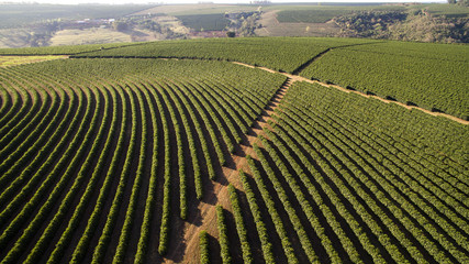 Aerial view coffee plantation in Minas Gerais state - Brazil Wall mural