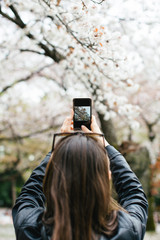 Back view of a tourist taking a photo with phone of the cherry blossom in Japan.