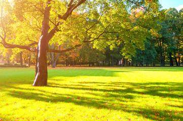 Wall Murals Yellow Autumn colorful landscape in sunny autumn landscape park lit by sunlight. Autumn park in soft sunshine