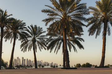 Doha skyline between palm trees