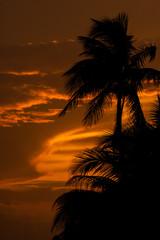 Palm tree silhouett