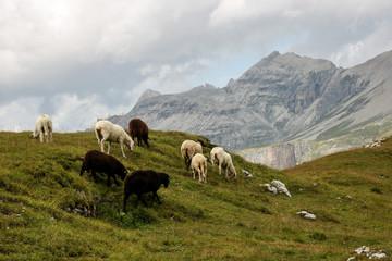 Dolomite's landscape -Puez odle natural park