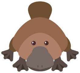 Cute platypus on white background
