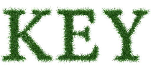 Key - 3D rendering fresh Grass letters isolated on whhite background.