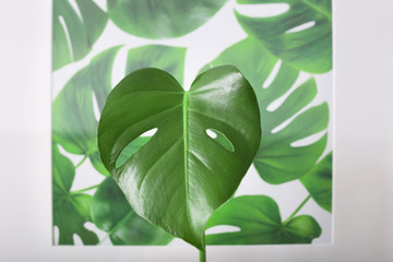 Monstera leaf and picture with tropical foliage on background